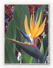 Birds of Paradise [SIGNATURE EDITION 18 x 23]