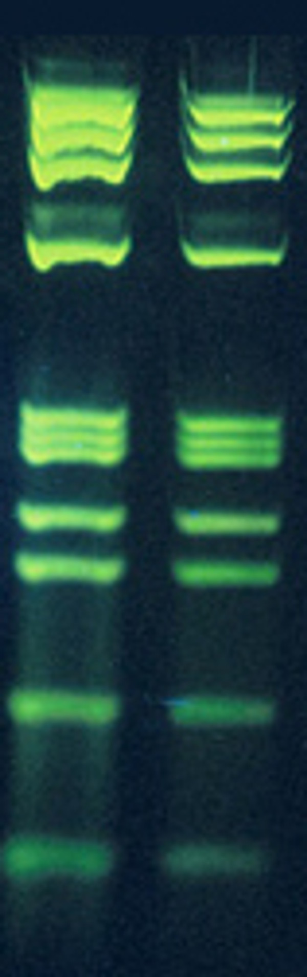 Gel Green like DNA Stain for Gels 10,000x