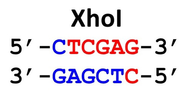 Restriction Enzyme XhoI 30uL