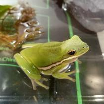 Frog Genetic Engineering Kit Beta Test Version