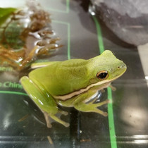 Frog Genetic Engineering Kit Beta Test Version