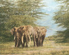 AMBOSELI ANCIENTS, by Simon Combes LIMITED EDITION PRINT