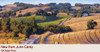 Old Napa Road by June Carey - Framed