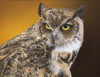 close up of owl painting