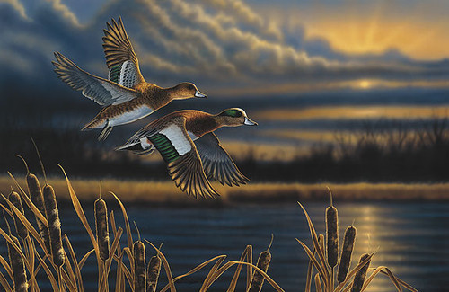 WIDGEON - OUT FRONT, by Richard Clifton LIMITED EDITION PRINT