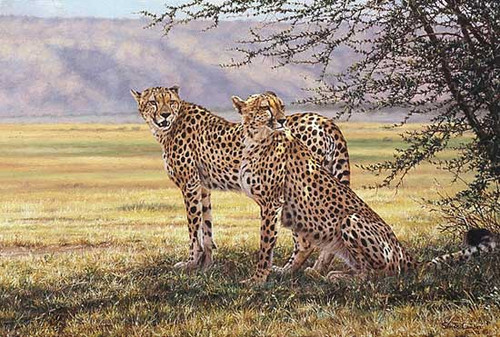 IMMINENT PURSUIT, by Simon Combes LIMITED EDITION PRINT