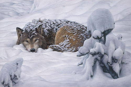 Winter's Embrace, by Daniel Smith LIMITED EDITION CANVAS