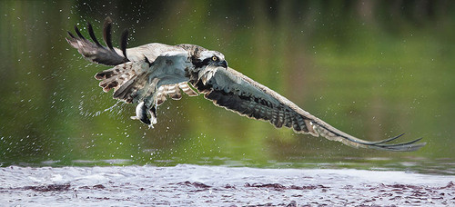 Catch of the Day by John Bye