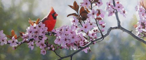 Backlit Cardinal painting by Terry Isaac