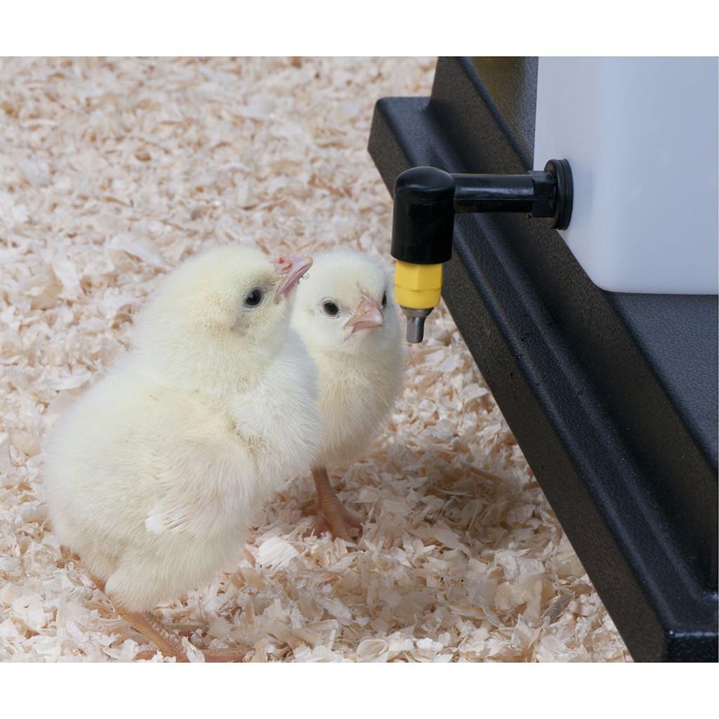 Baby Chick 1 Liter Nipple Drinker Waterer