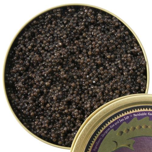 Florida Siberian Caviar