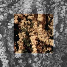 Cleared - Drown - LP Vinyl