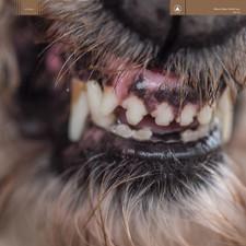 Blanck Mass - World Eater - LP Vinyl