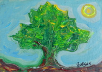 GREEN FRAMBOYAN-  SOLD.