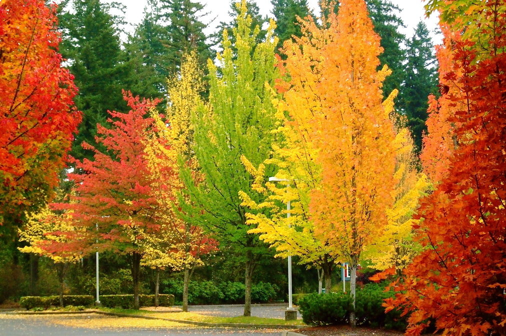 trees and shrubs for sale online