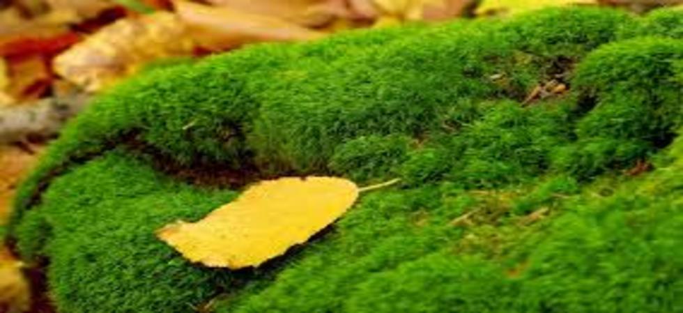 Buy Live Moss