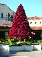 Poinsettia Frame Tree - 9.5FT to 25.6FT