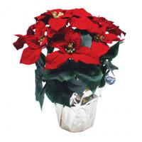 "14-15"" Silk Poinsettia Plant"