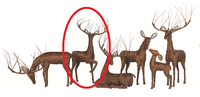 "Grapevine Deer - Prancing Buck 40"" x 90"""
