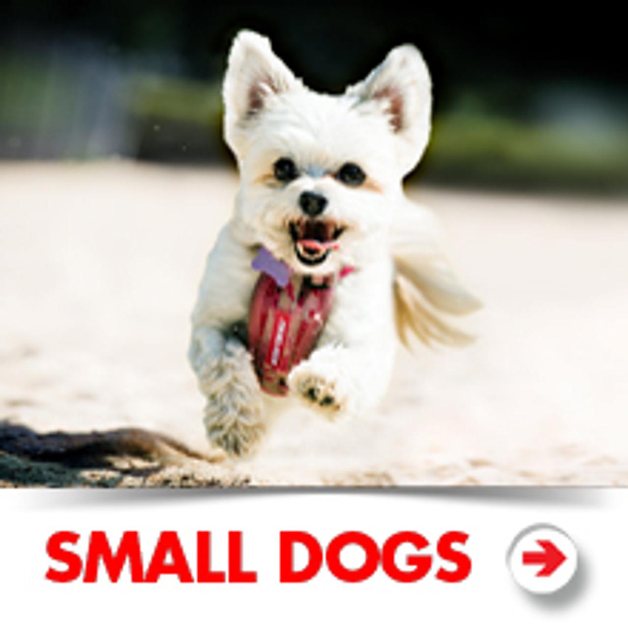 Small Dog Accessories