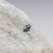 Rare: Naturally Occurring Tungsten Disulfide (WS₂)