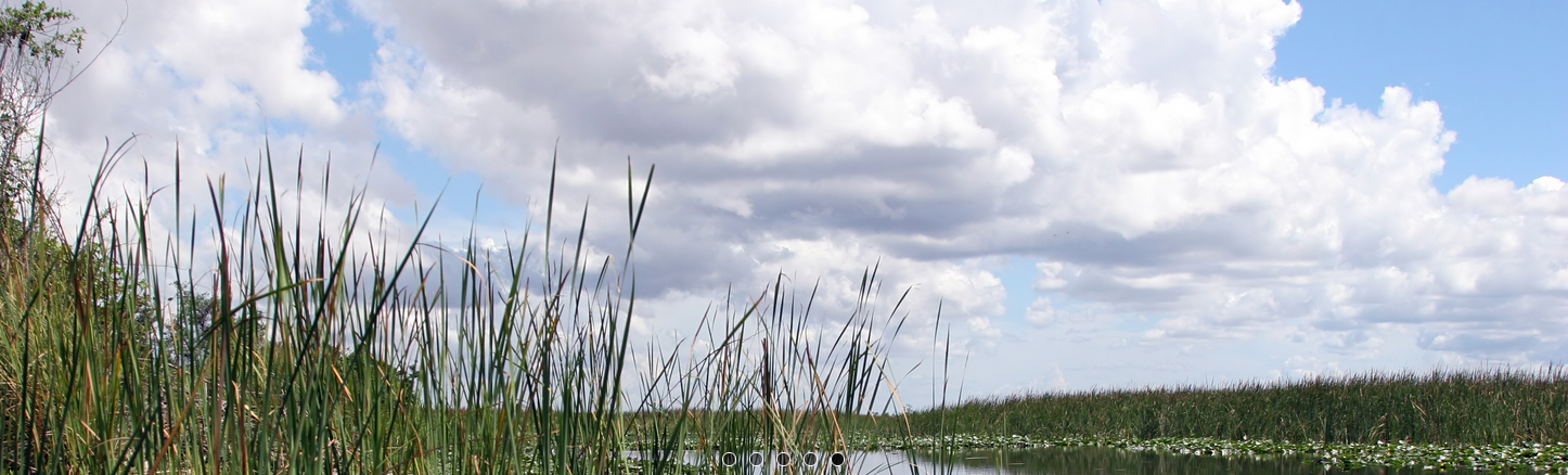 everglades-banner-5.png