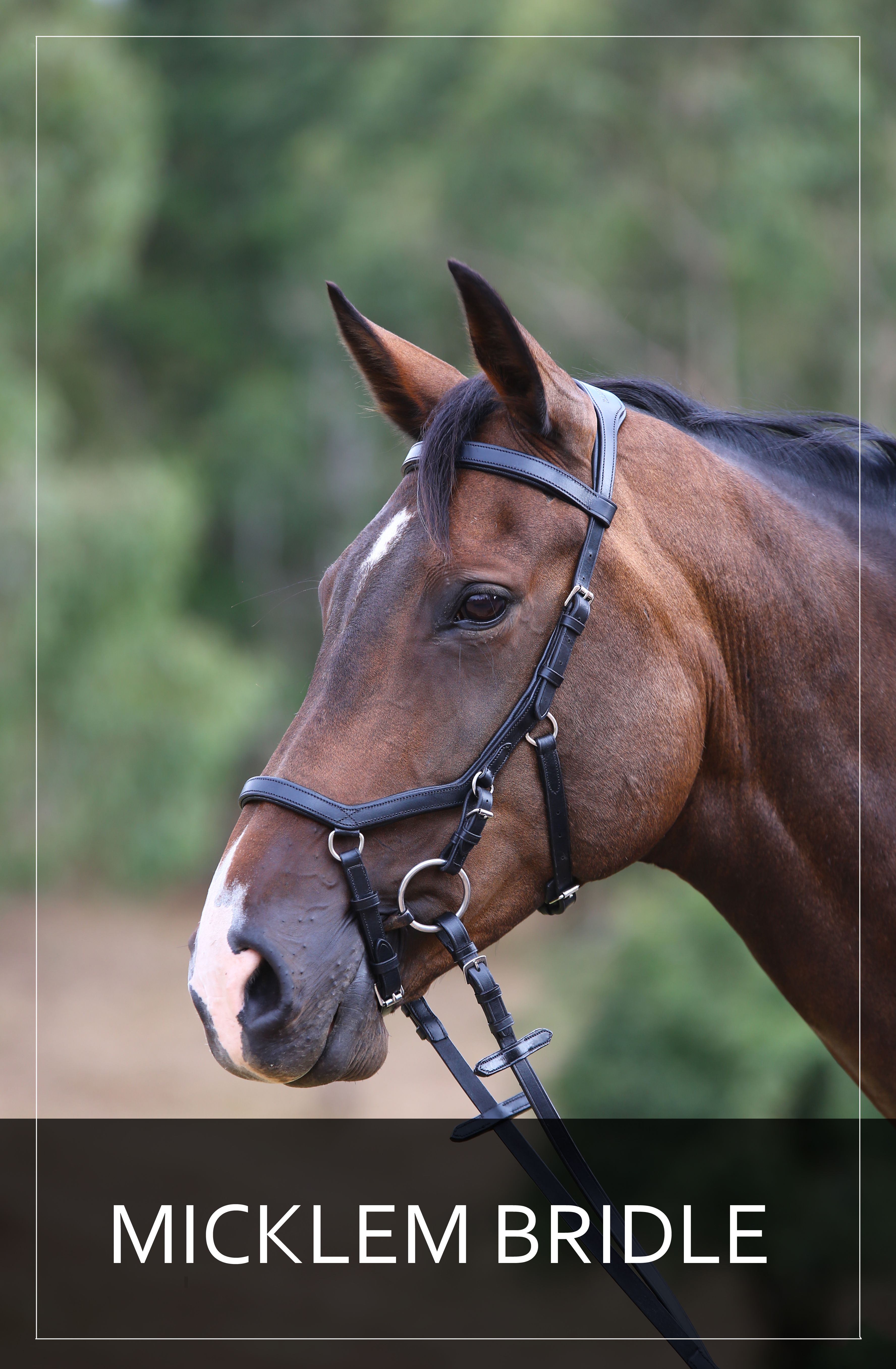 front-page-micklem-bridle.jpg