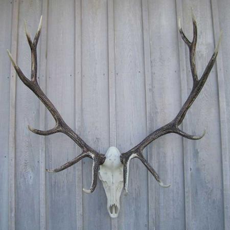CHESET Elk European Mount