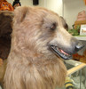 Animatronic Realistic Professional Adult Brown Bear Costume-Mama