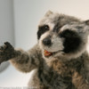 Realistic Raccoon replica movie prop that is made from the mold set presented herein.