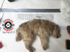 """The dog prop is approximately 18"""" long, when measured along it's spine."""