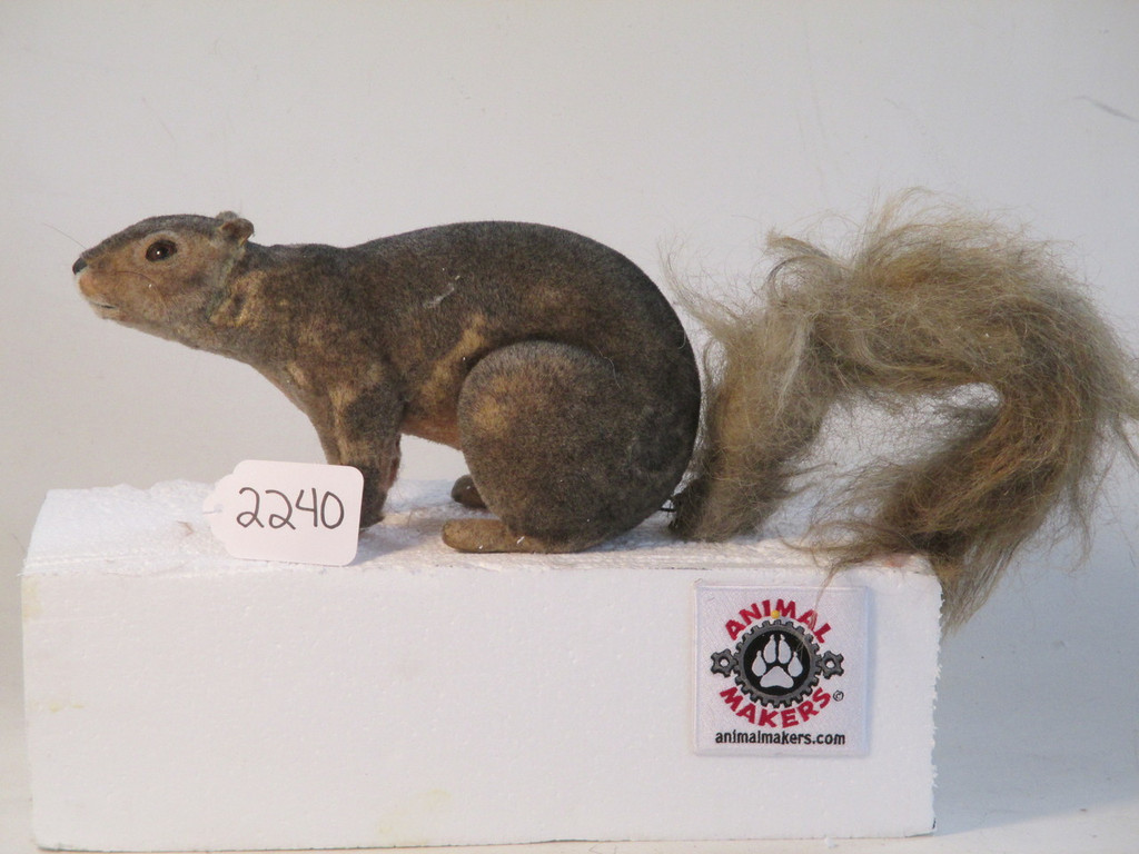 Squirrel 2 Prop