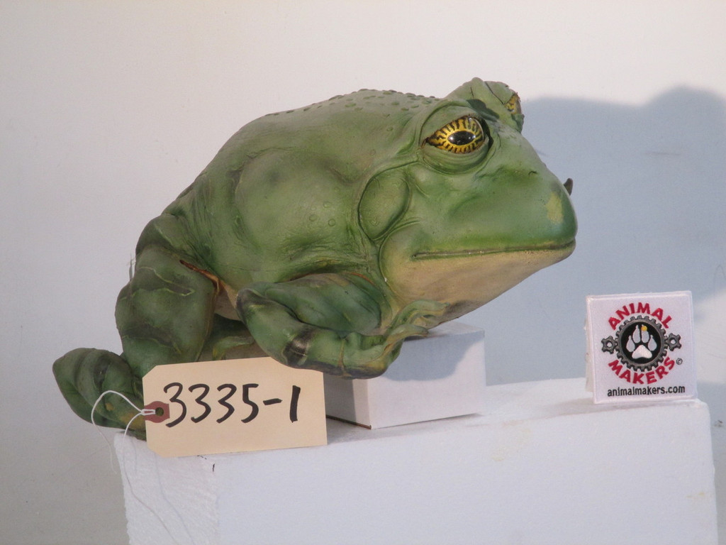 Large PacMan Frog