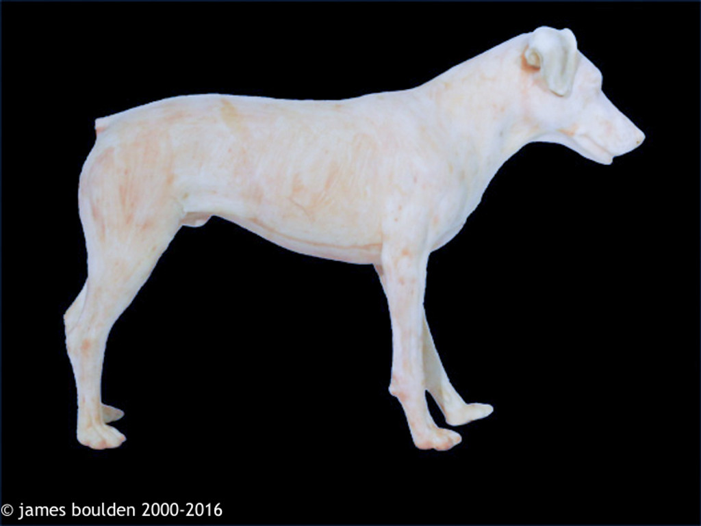 Realistic Standing Terrier Replica Body Form