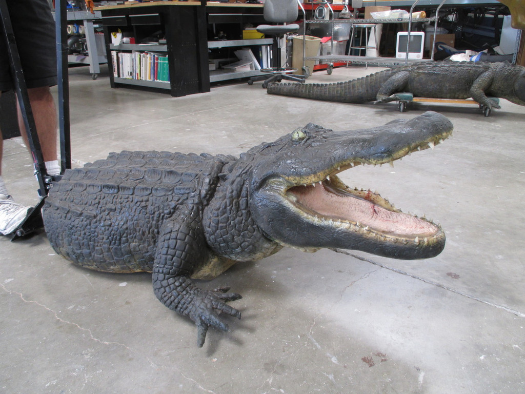 alligator prop with animation