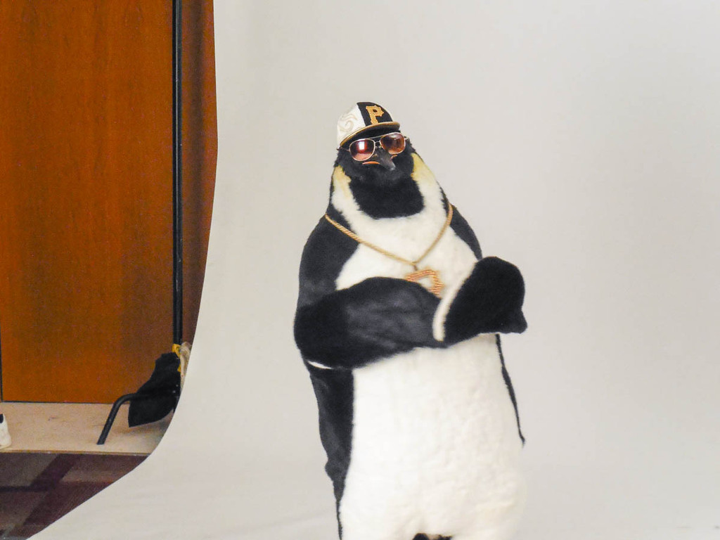 animated, realistic penguin movie costume