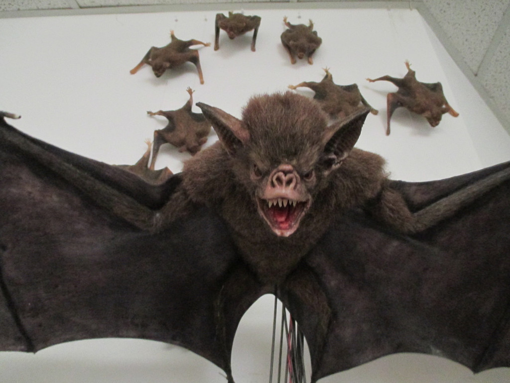 animated vampire bat with minions seen behind for film directors