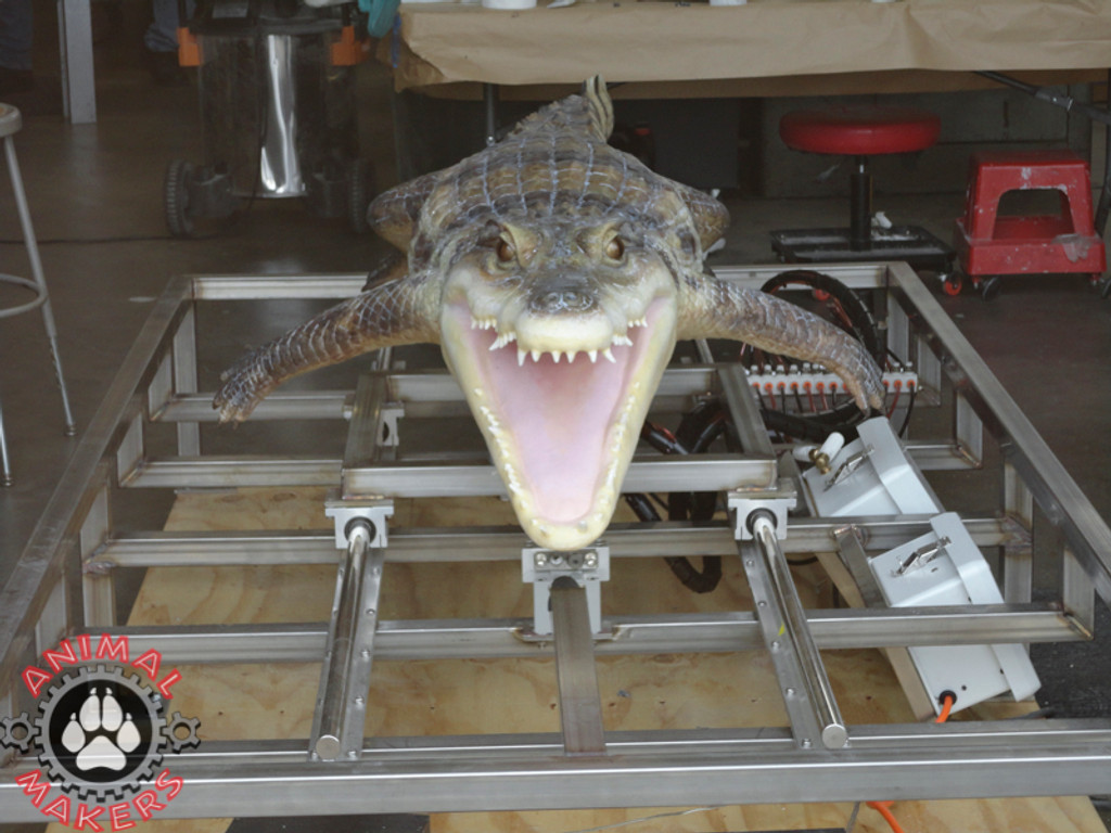 Animated Alligator Caiman Crocodile Replica