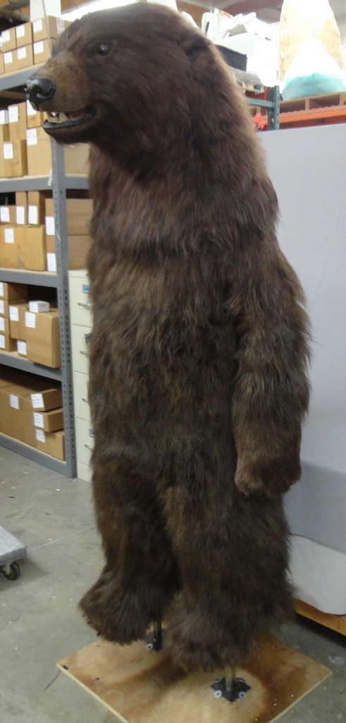 Teddy, the realistic adult bear costume