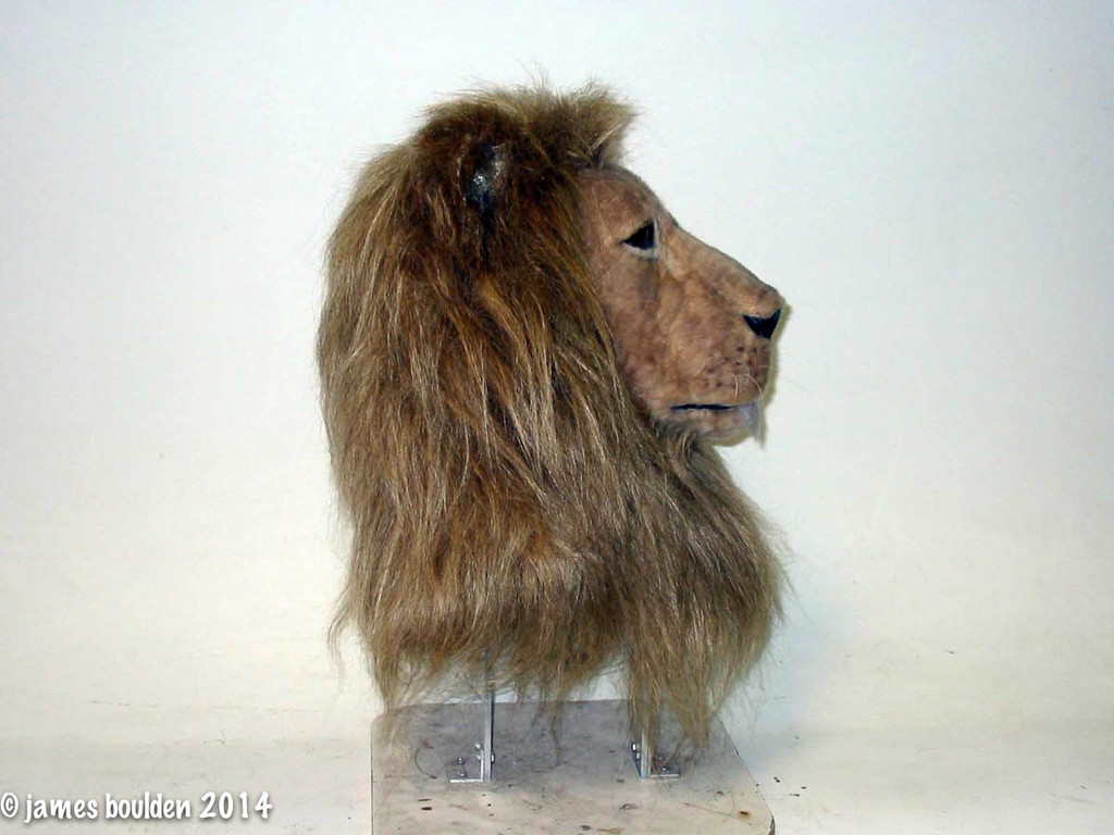 Lion Mask Fur Pattern