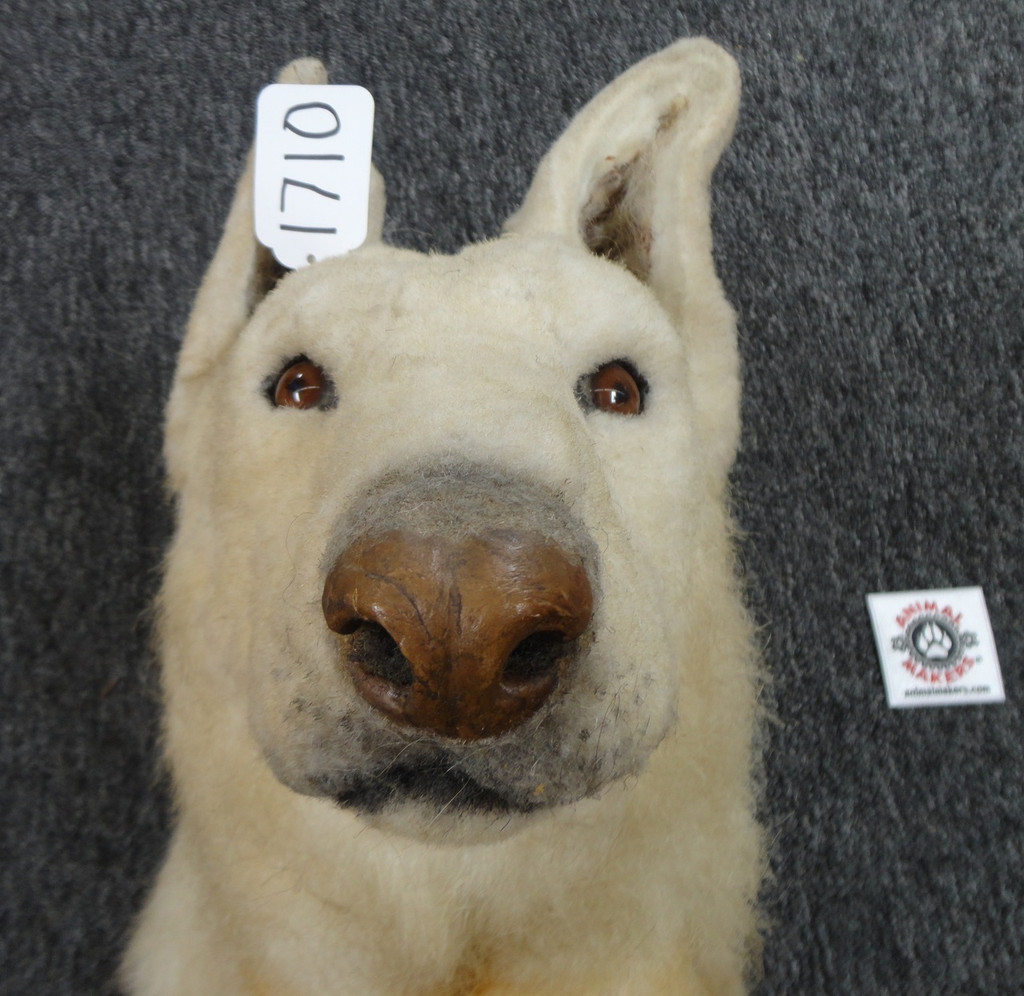 Realistic Dog Head Prop Hand Puppet Style