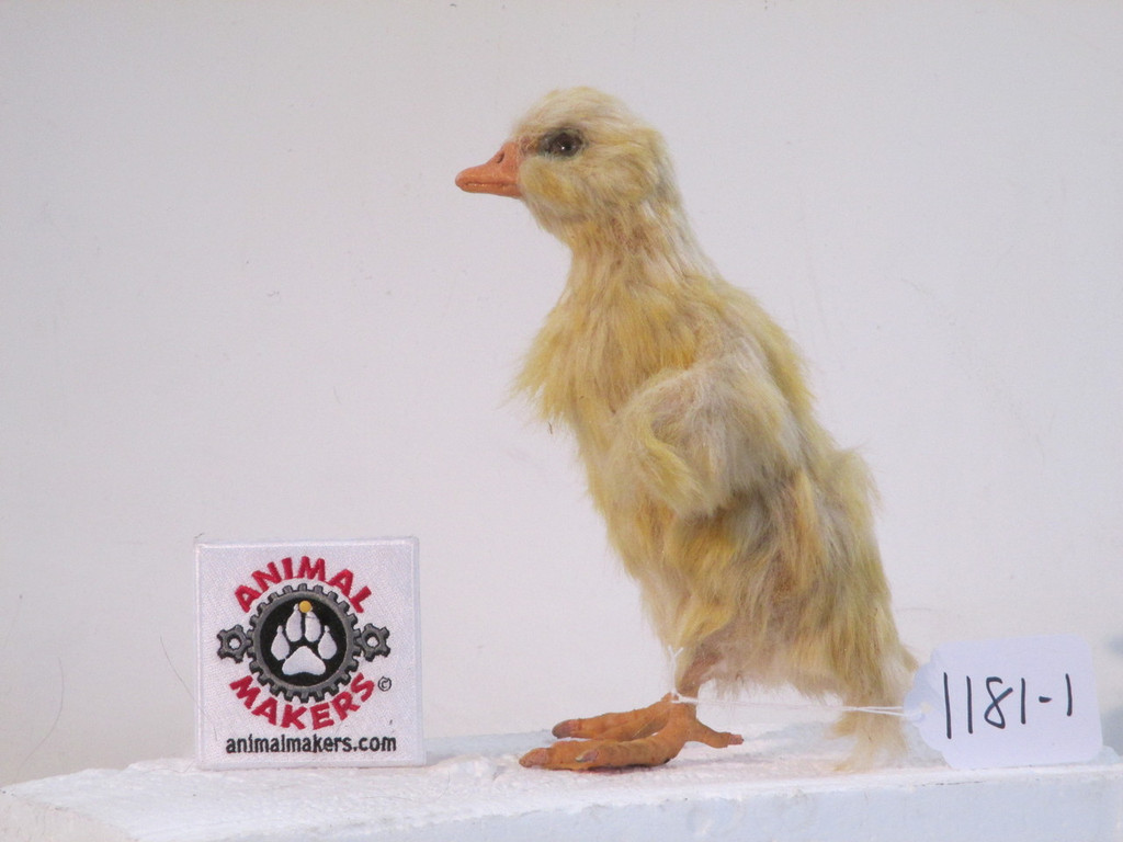 Realistic Duckling Movie Prop
