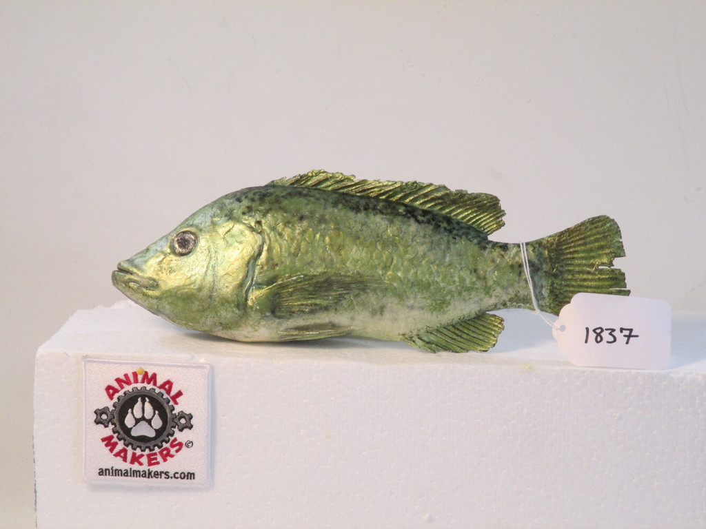 Realistic life sized tilapia fish replica movie props for Is tilapia a real fish