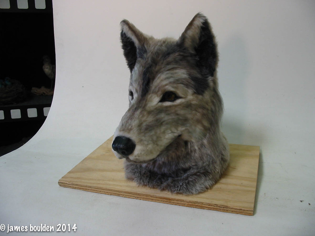 Realistic Wolf or Dog Mask Build to Order