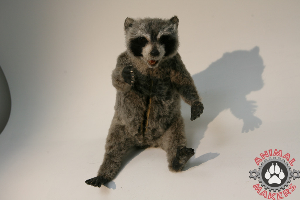 Finished Realistic Raccoon replica