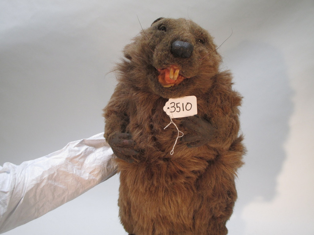 Realistic Beaver Puppets Props and Molds Art Production Set