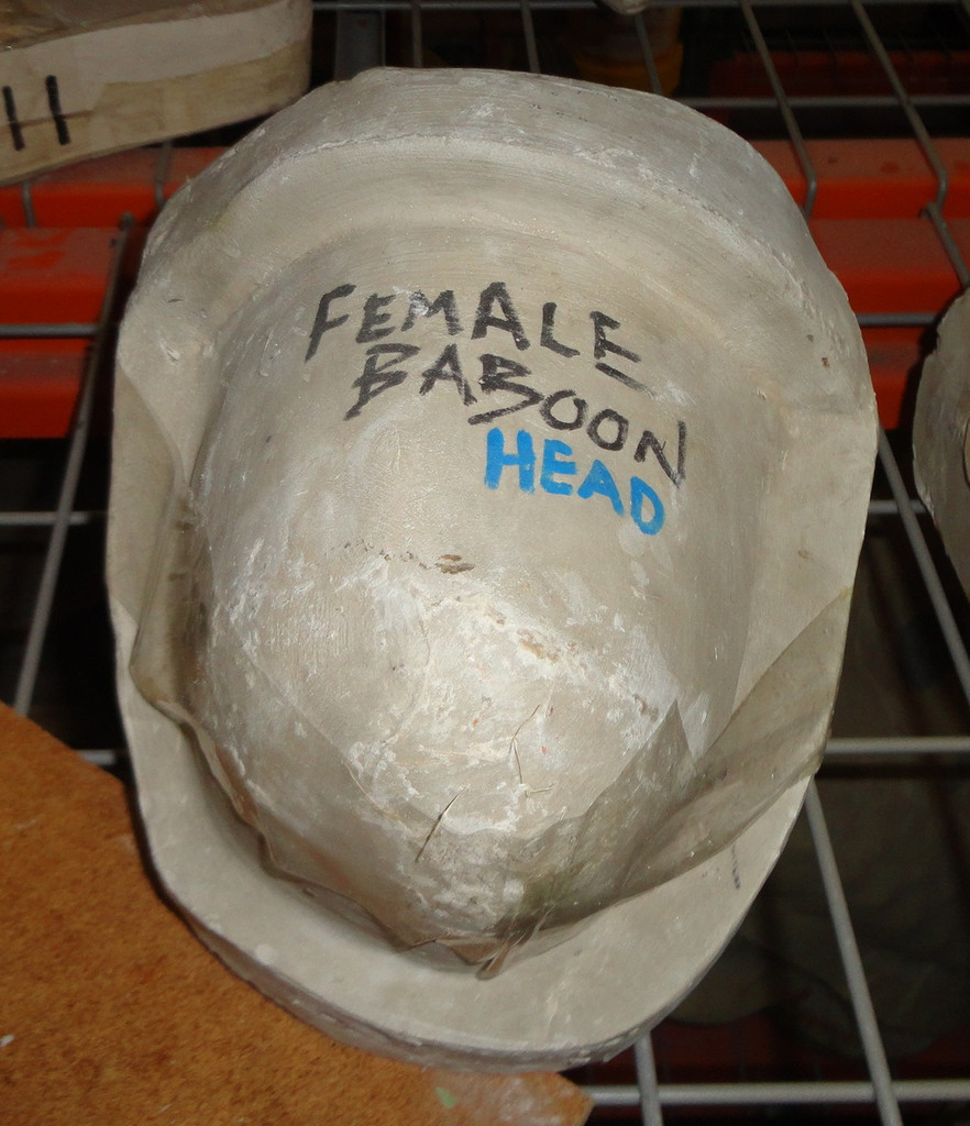 Female Baboon Head Mold