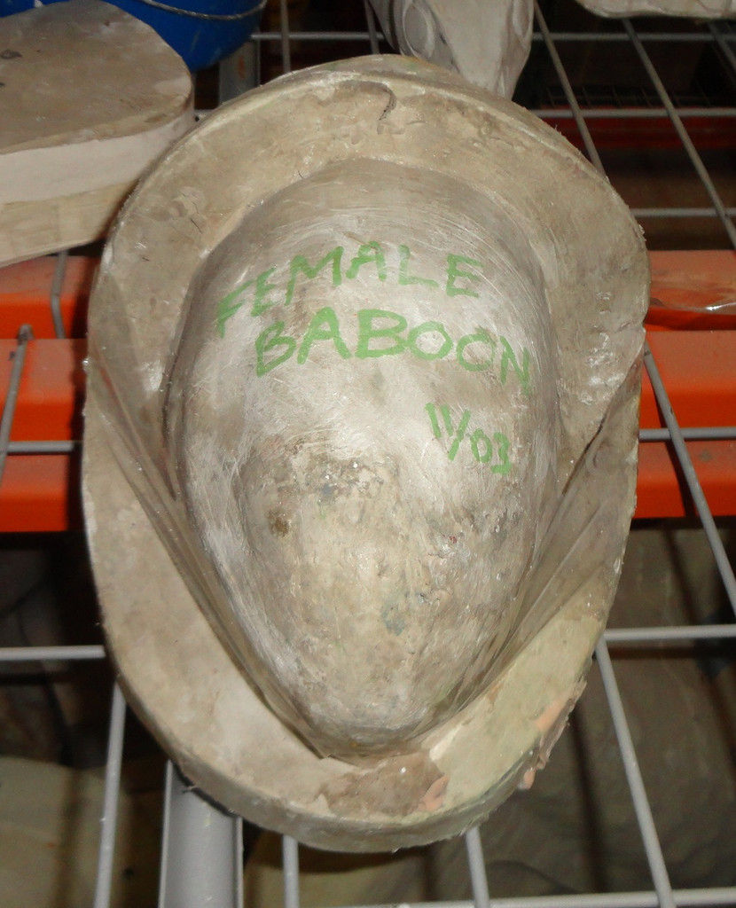 Female Baboon Head Mold 2