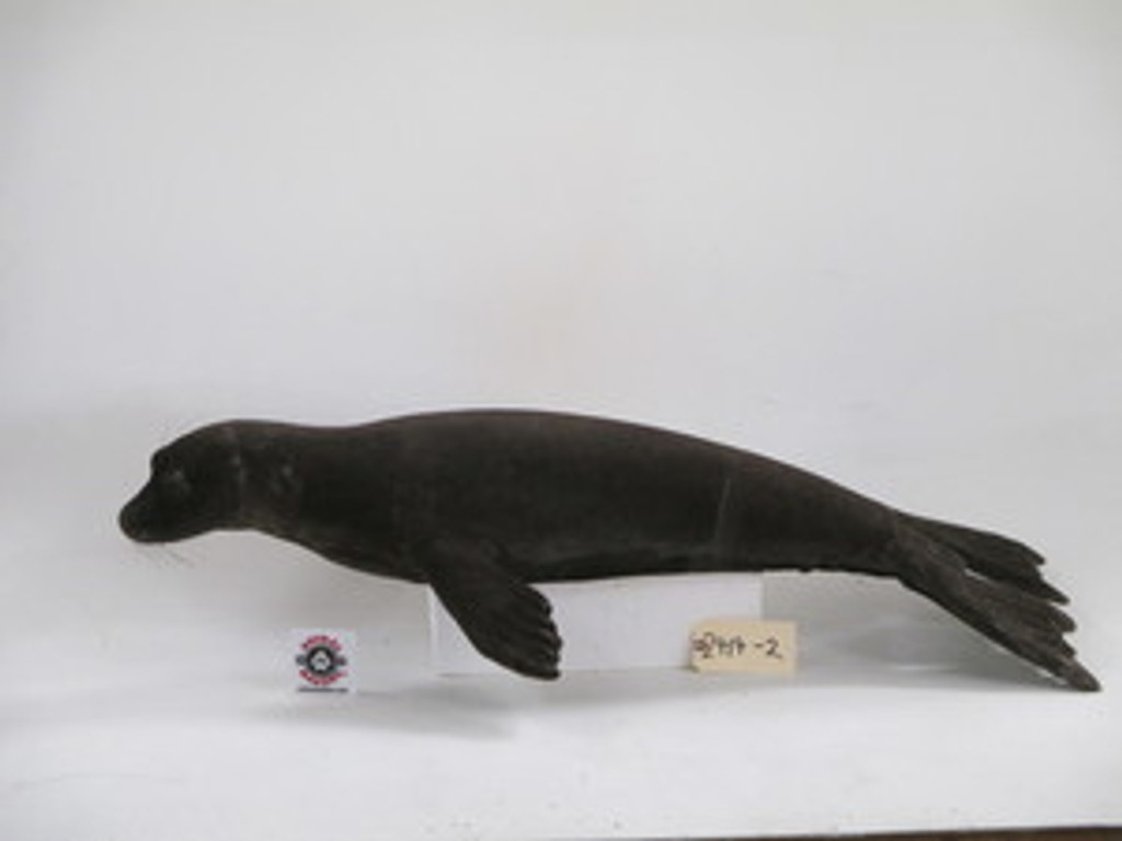 Brown Seal Replica 2