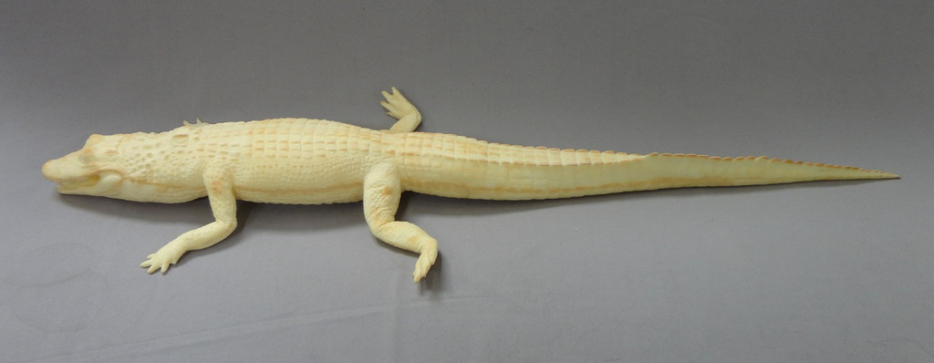 Baby Saltwater Crocodile/Alligator Blank Flat Version